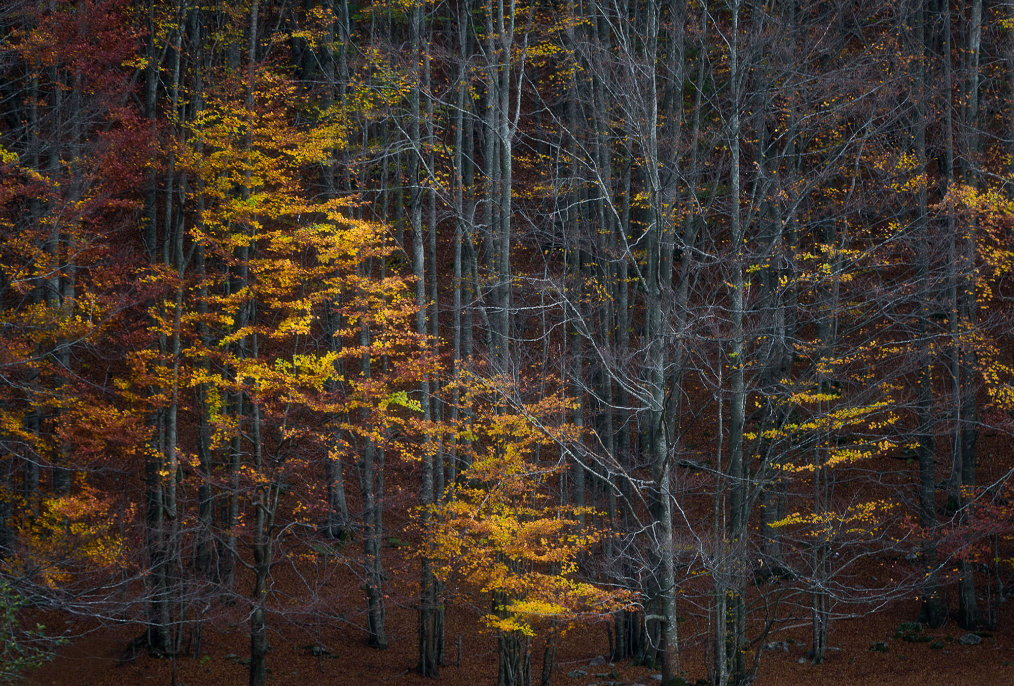 Foliage Apuane Emanuele Baroncelli