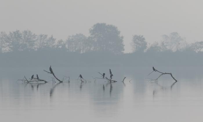 Delta del Po Pasquale Sannino
