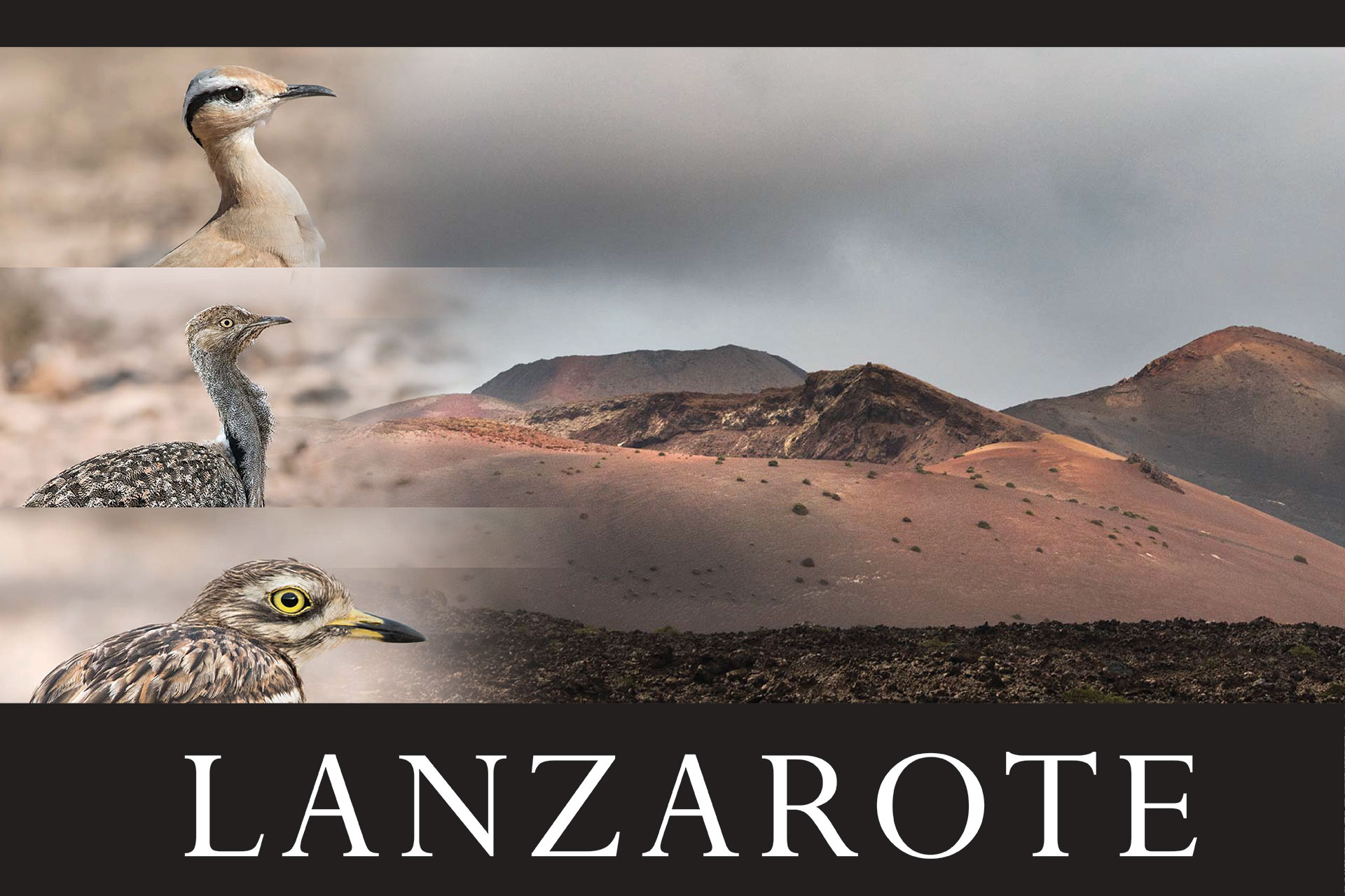 Lanzarote Workshop