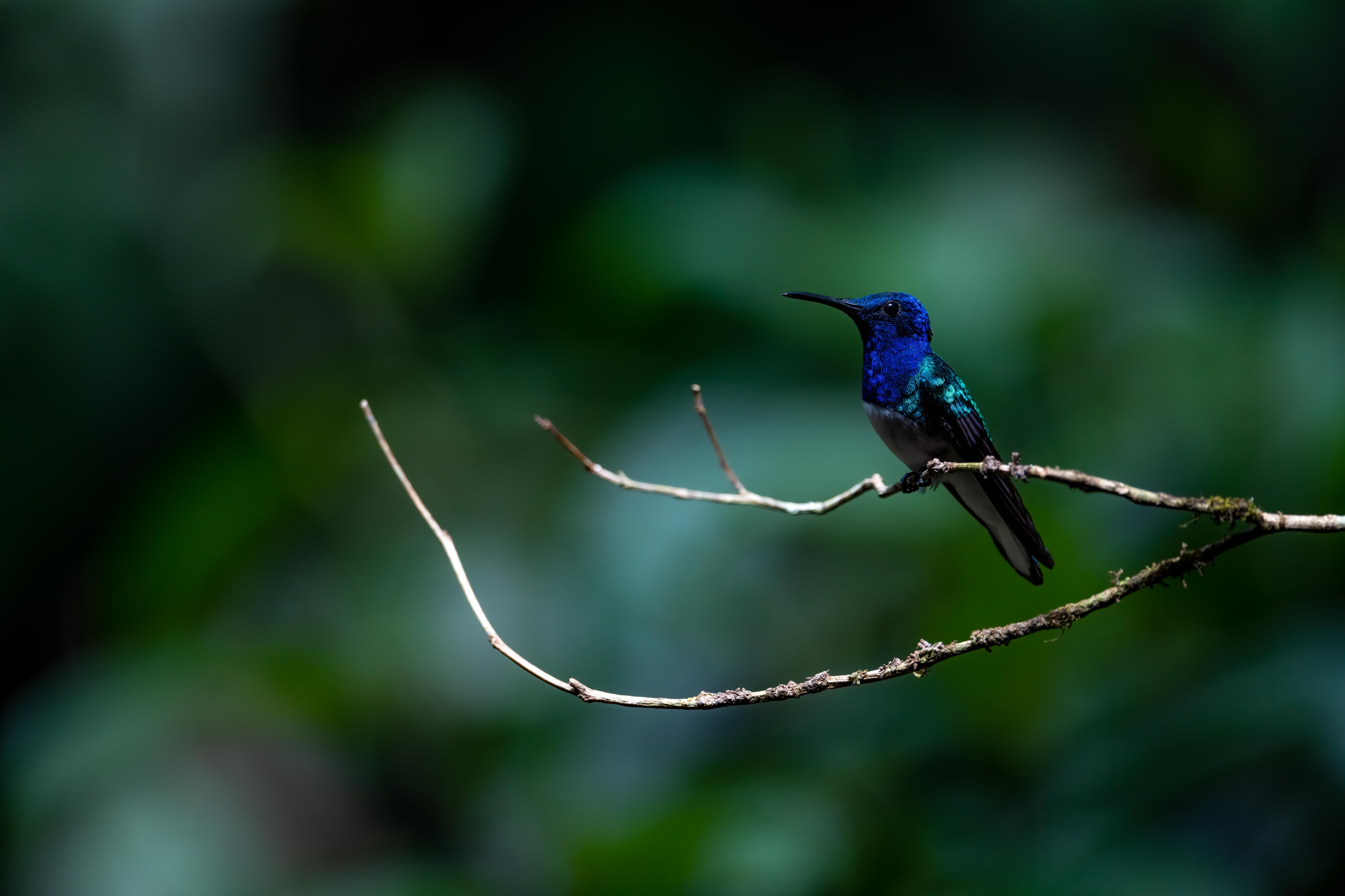 Costa Rica, Nicola Zannino